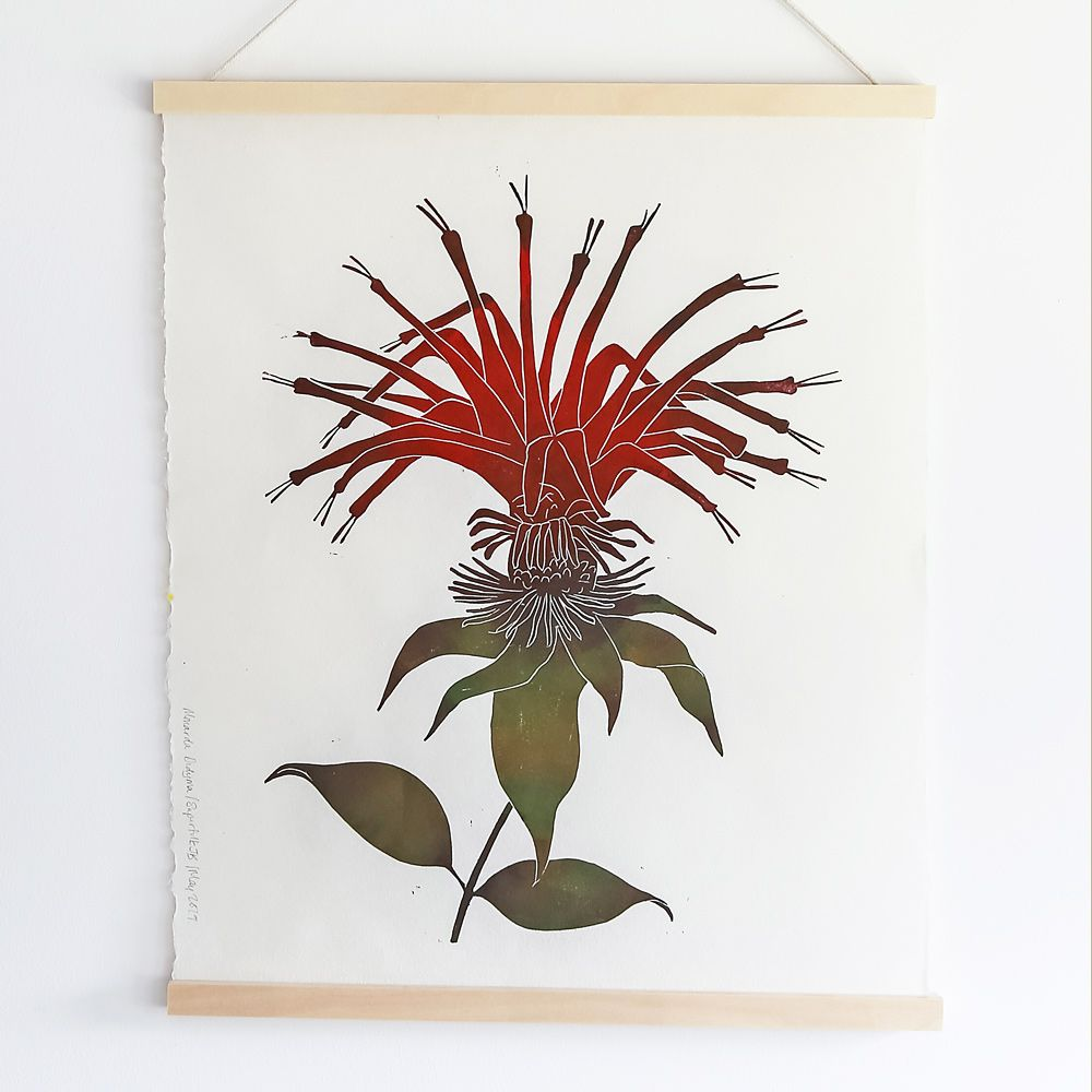 Monarda didyma Print from Superfolk - Standard Shipping Included
