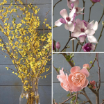 Three Months of Flowering Branches, February-April
