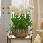 Golden Queen Bulb Collection, 24 bulbs in glass bowl