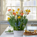 Spring Panache Bulb Collection