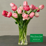 Pink Tulip Bouquet with Vase Plus $50 Gift Card - Standard Shipping Included