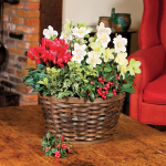 Winter Blooms Dish Garden Kit