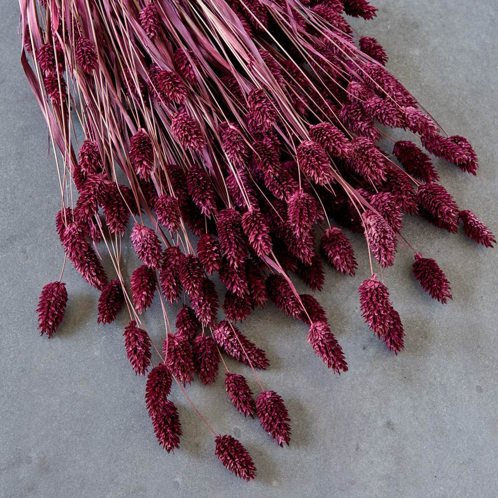 Blackberry Canary Grass Stems