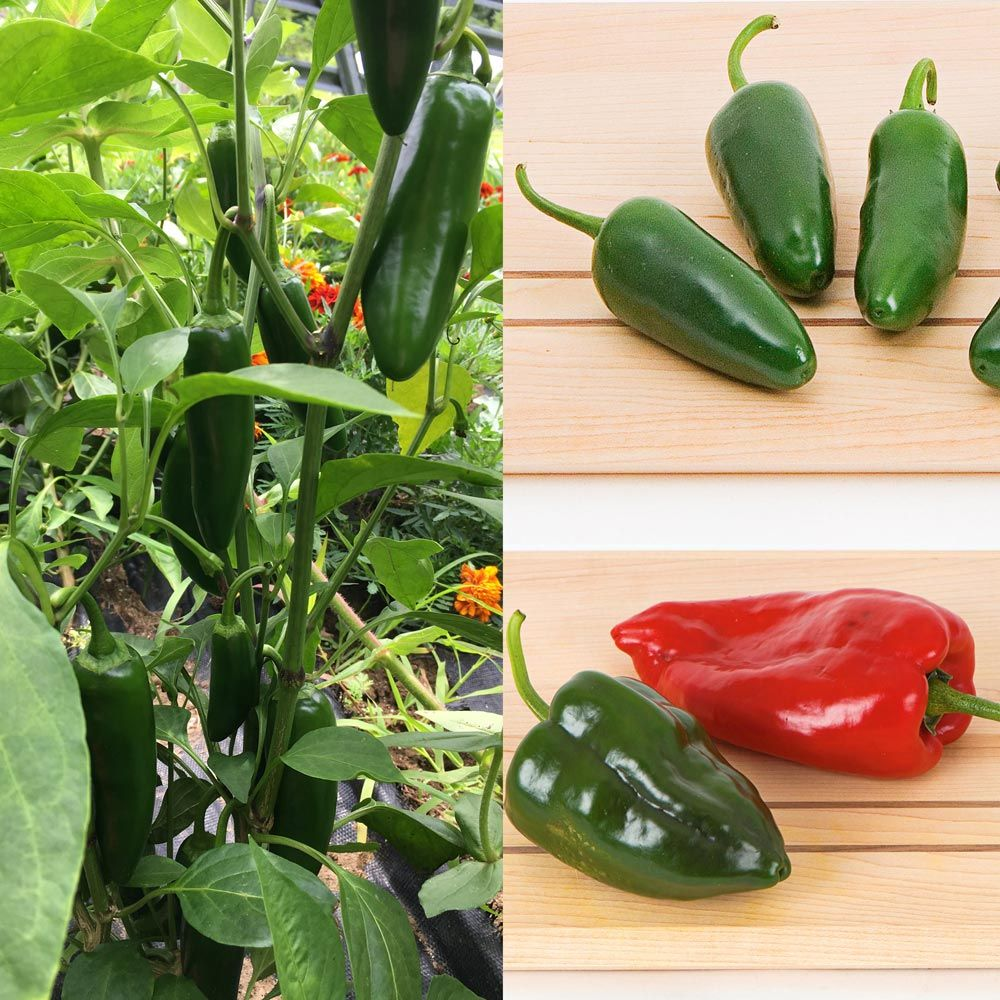 Chili Pepper Sampler