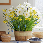 Golden Moments Bulb Collection, 63 bulbs in large wooden basket