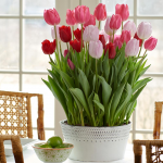 Rosy Outlook Bulb Collection, 36 bulbs in a metal cachepot