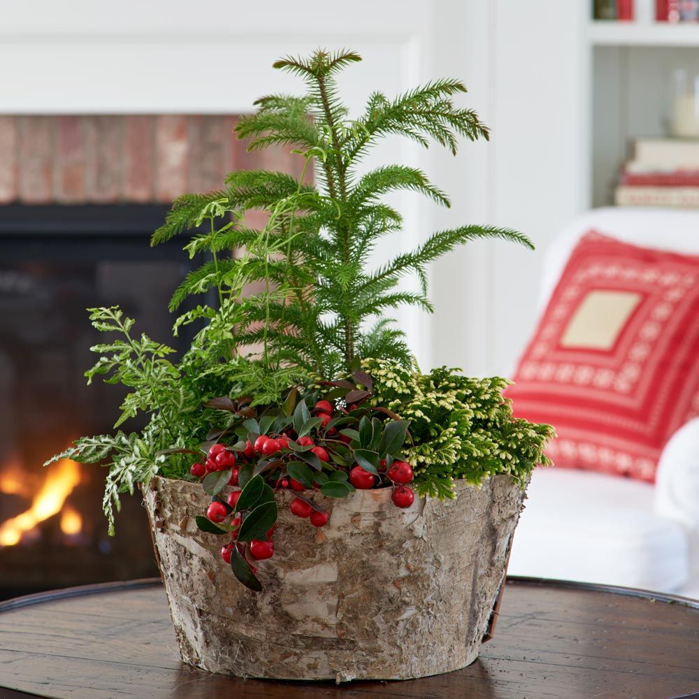 Holiday Dish Garden Kit