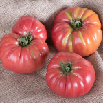 Tomato 'Chef's Choice Pink'
