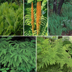 Native Fern Sampler of 5 Different Varieties
