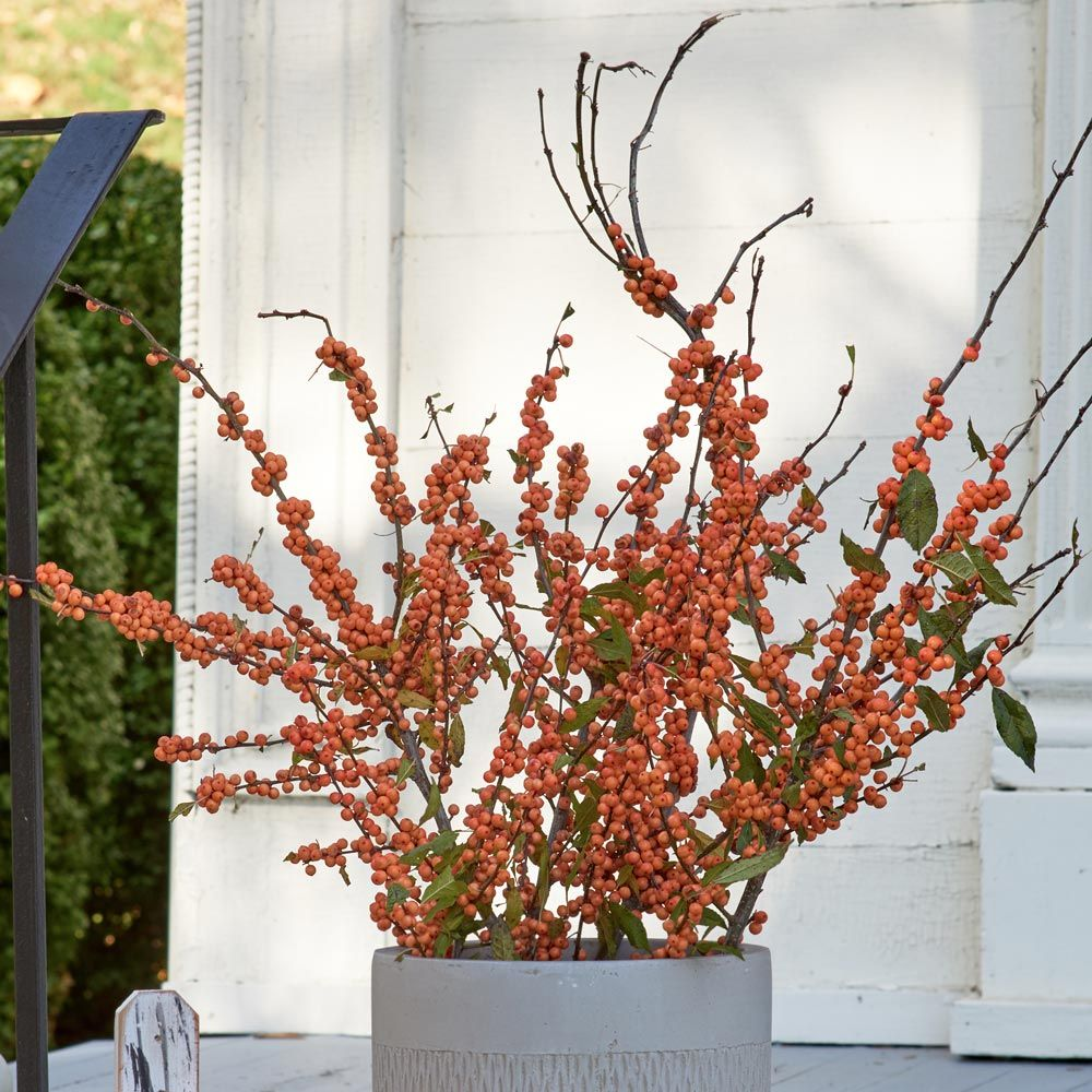 'Winter Gold' Winterberry Branches (Set of 4)