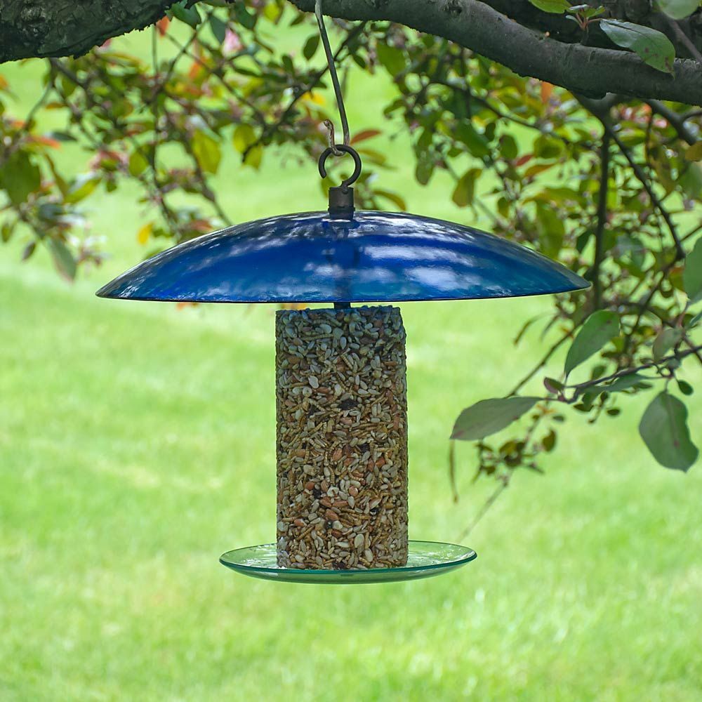 Cobalt Pavilion Bird Feeder & Seed Treat Duo