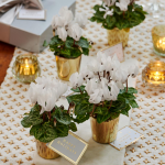Mini White Cyclamen Quartet in golden glass cachepots
