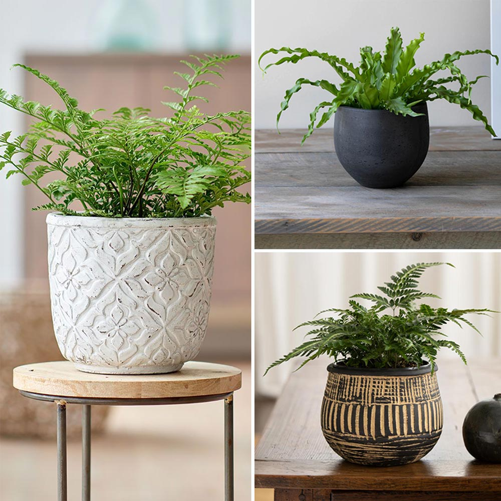 Three Months of Ferns, December-February