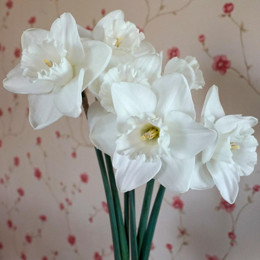 Narcissus 'Love You More'
