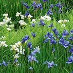 All Preplanned Gardens & Plant Collections for Sun
