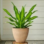 Indoor Plants by Category