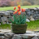 Ready-to-Bloom Bulb Baskets