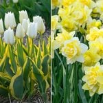 Cheerful Radiance Spring Duo