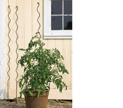 Tomato Spirals - Set of 3