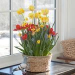 Chill Chaser Bulb Collection
