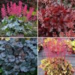 Classic Preplanned Gardens & Plant Collection