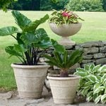 Containers & Planters