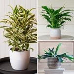 Three Months of Easy-Care Houseplants, December-February