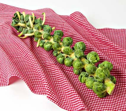 Brussel Sprouts Churchill