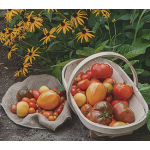 American Heirloom Tomato Collection 6 plants