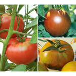 Set of 3 Heirloom Tomatoes