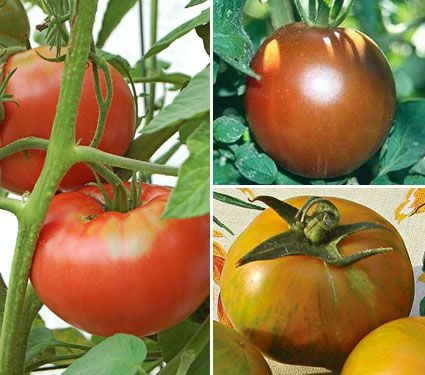 Set of Three Heirloom Tomatoes