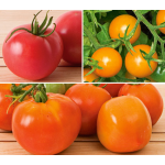 Tomato Collections