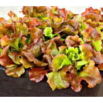 Lettuce Red Sails, 8-pack