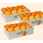 Citrus Sampler Gift Boxes, 10-lb box to 3 Different Addresses - Standard Shipping Included