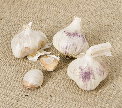 Garlic Inchelium Red, 1 lb