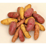 Fingerling Potato Patch Collection