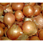 Dutch Yellow Shallots