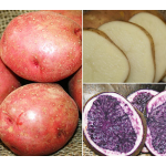 Red, White & Blue Potato Collection