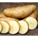 Potato Russian Banana, bag of 10 minitubers