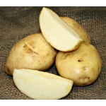 Potato Kennebec, bag of 10 minitubers