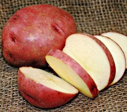 Potato Red Norland, bag of 10 minitubers