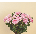 Light Pink Rose Bouquet - 12 stems