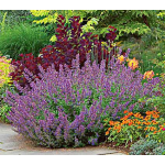 Deer Resistant Plants & Bulbs