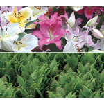 Oriental Lily and Ostrich Fern Collection