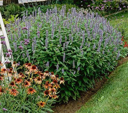 Perennials for Pollinators