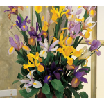 Dutch Iris Mixture