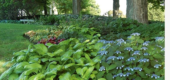 1 Shade Garden    Color And Texture From Minor Spring Bulbs, Hydrangea  U0027Blue Billow,u0027 And Shade Loving Perennials, Such As Hellebores, And  Colorful Annuals.