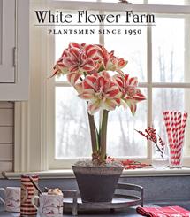 White Flower Farm