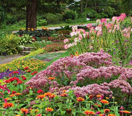 Satisfaction Guarantee | White Flower Farm