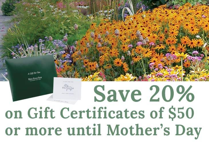Self watering containers white flower farm send mom a gift certificate this year mightylinksfo Images